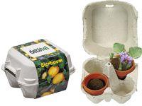 Eierbaum-Box, Eierbaumsamen, 1-4 c Digitaldruck inklusive