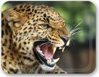 Lovely_Layla_Leopard