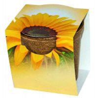 Easy Wachstums-Topf Sonne, Zwergsonnenblume, 1-4 c Digitaldruck inklusive