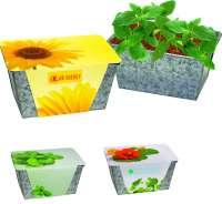 Wachstums-Kästchen Sonne, Zwergsonnenblume, 1-4 c Digitaldruck inklusive