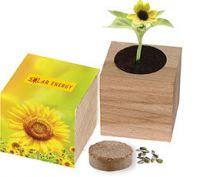 Natur-Würfel groß, Zwergsonnenblume, 1-4 c Digitaldruck inklusive