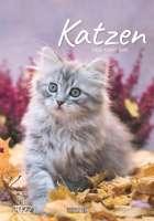 Wandkalender Katzen
