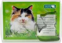 Backförmchen Box Katze
